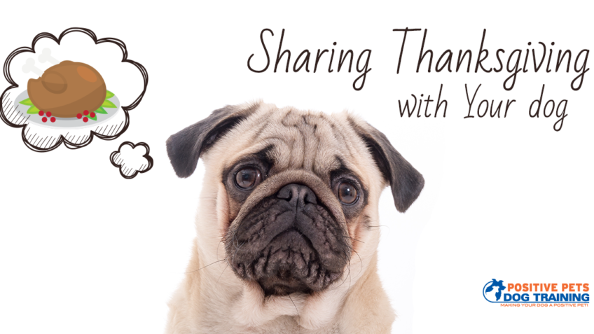 sharing thanksgiving with your dog