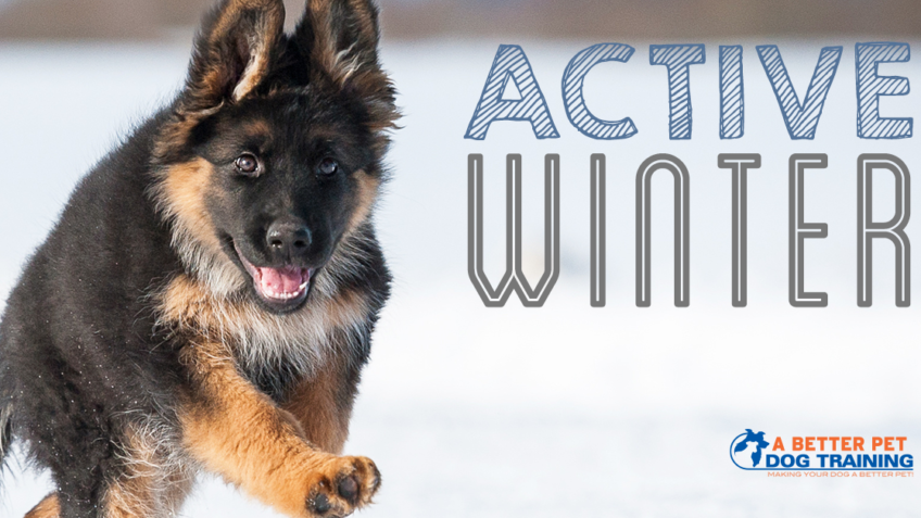 keep your dog active during winter