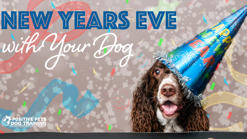 celebrate new years eve with your dog