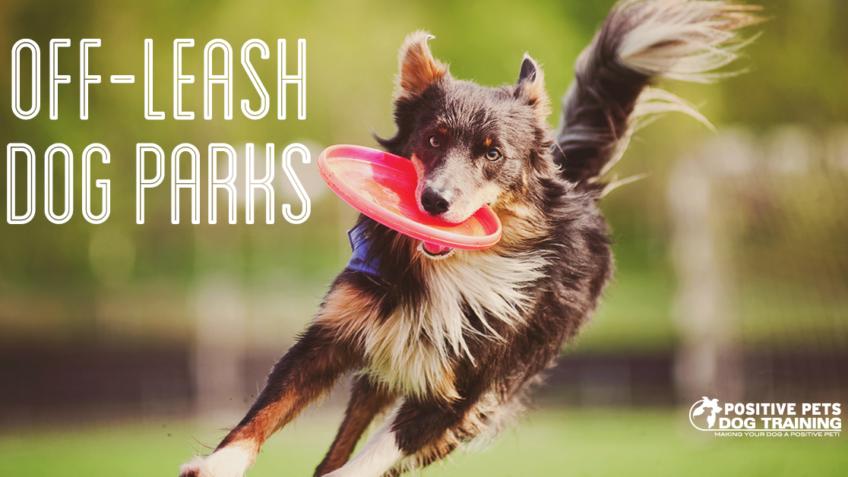 off leash dog park boise