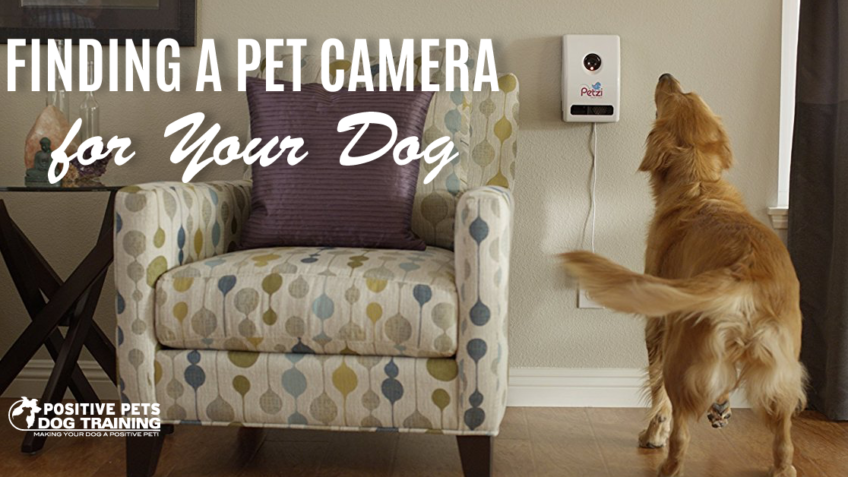 finding a pet camera for your dog
