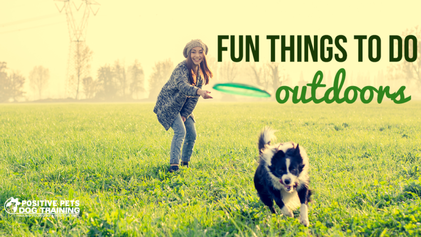 fun things to do outdoors with your dogs