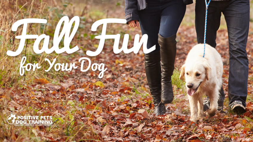 Fun Fall Activities for your Dog in Boise.