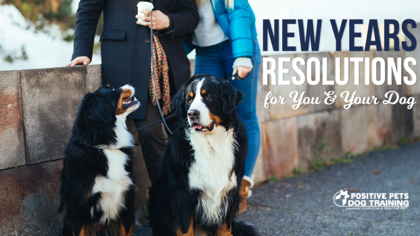 New Years Resolutions for You and Your Dog.