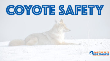 Coyote safety for your dogs.