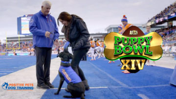Animal Planet Puppy Bowl XIV cute as fluff, Kohl the football dog.
