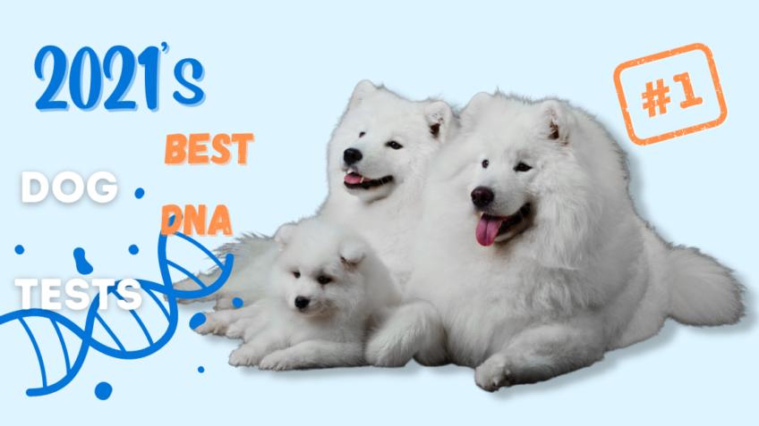 2021 Best Dog DNA Tests