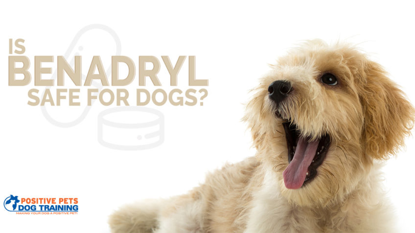 Is Benadryl Safe for Dogs?