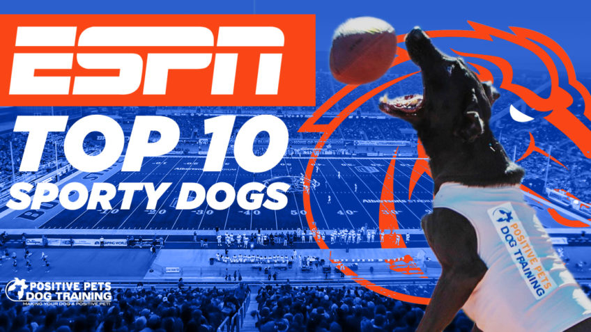 Kohl Featured in ESPN Top 10 Sporty Dogs