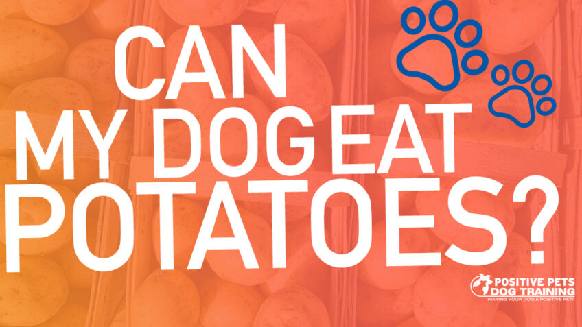 Can My Dog Eat Potatoes?