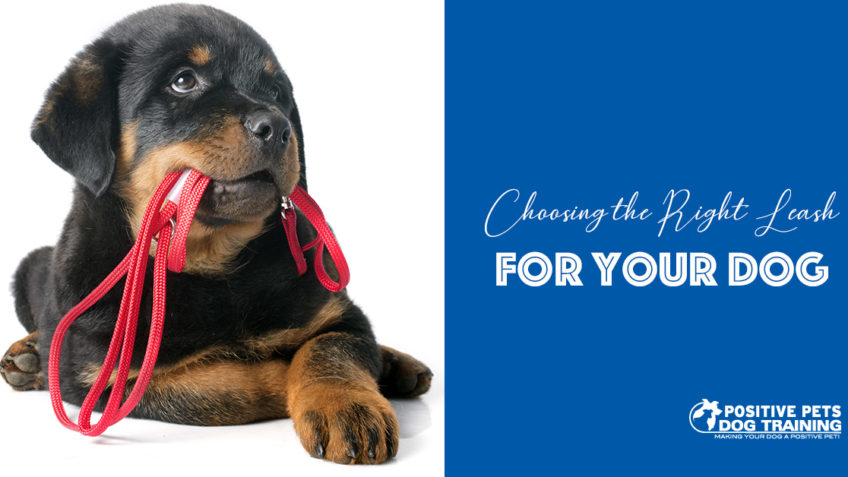 How to Pick the Right Leash for Your Puppy