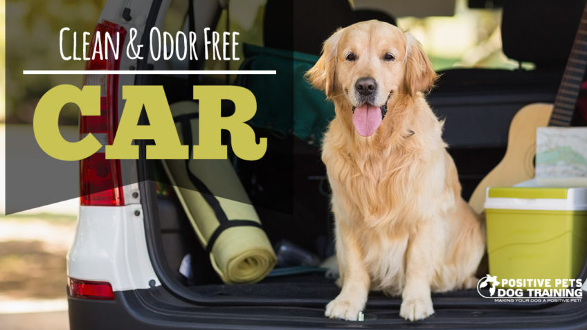 Cleaning your car with dogs.