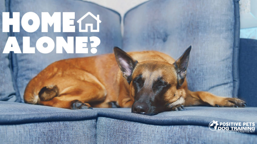 How Long Can My Dog Be Alone?