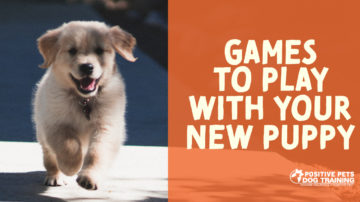 Games to Play with Your New Puppy