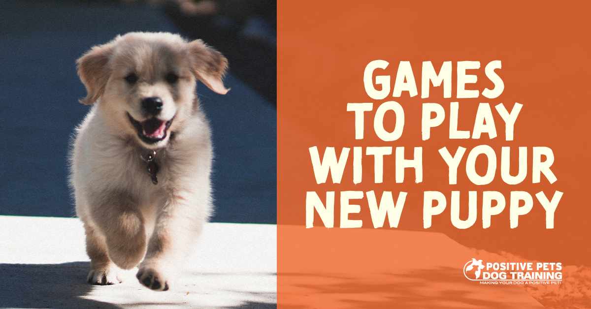 Games To Play With Your New Puppy Positive Pets Dog Training