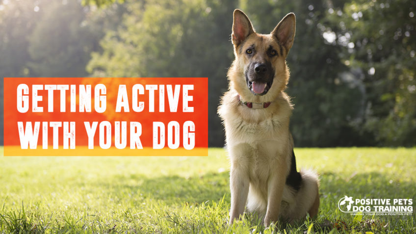 Getting active with your dog this Summer.