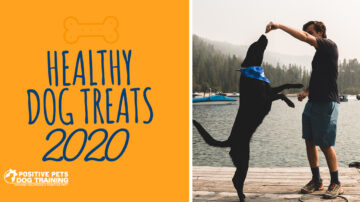 The Best Healthy Dog Treats of 2020