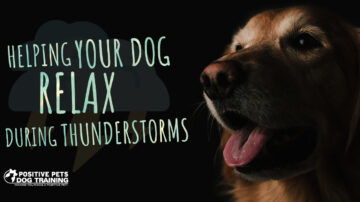 Helping Your Dog Relax During Thunderstorms