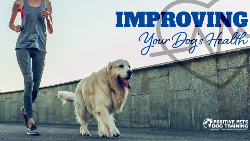 Improving Your Dog's Health