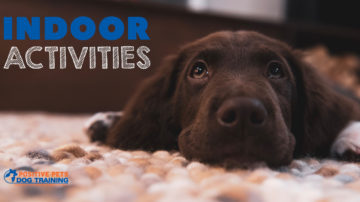 Fun Indoor Activities for Dogs