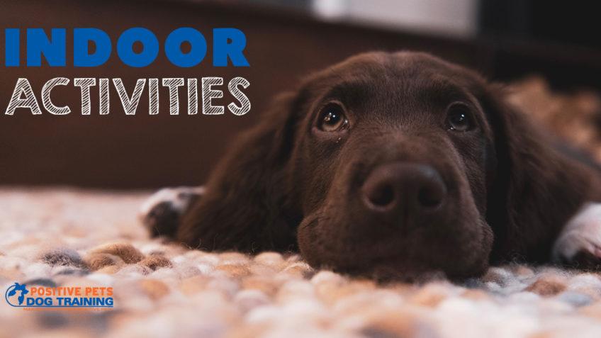 Fun Indoor Activities for Dogs