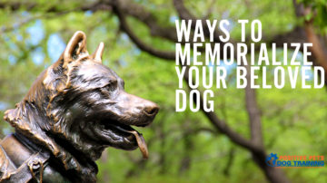 Ways to Memorialize Your Beloved Dog