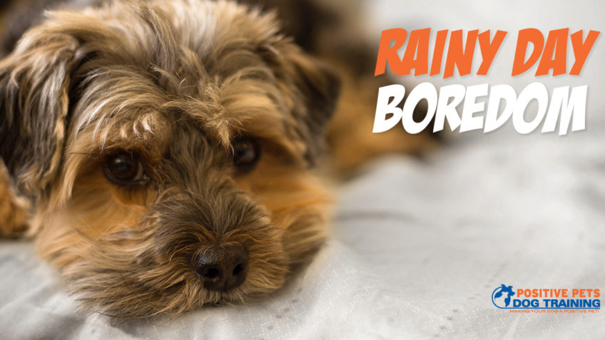 Rainy Day Activities for Your Dog