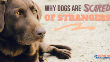 Why Dogs Are Scared of Strangers