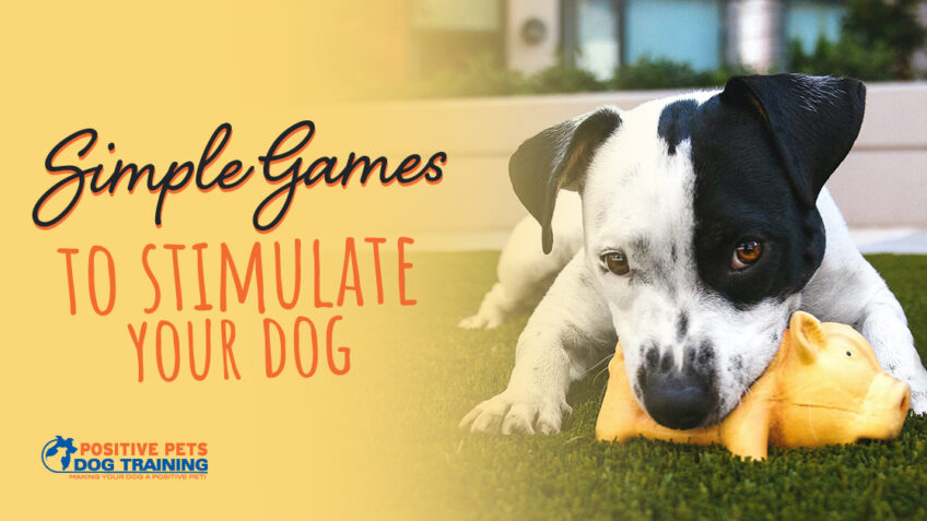 Simple Games to Stimulate Your Dog