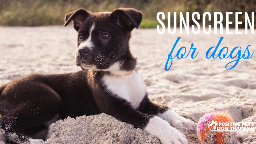 Sunscreen for dogs.