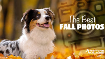 Tips for Taking the Best Fall Photos of Your Dog