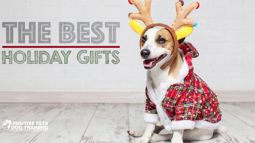The Best Holiday Gifts for Dogs