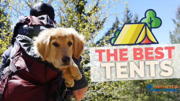 The Best Tents for Camping with your Dog