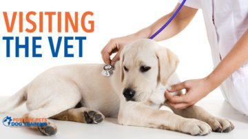 Is it time for your dog to visit the vet?