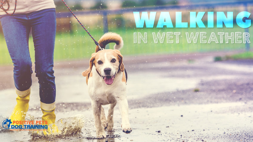 Tips for Walking in Wet Weather