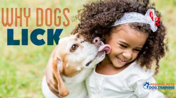 Why Dogs Lick