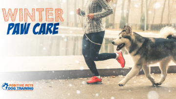 Winter Paw Care for Your Dog